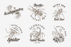 Ensemble de logos d'insectes Le vintage choie des labels pour le studio de barre ou de tatouage Araignée Ant Mantis Bee de scorpi illustration de vecteur