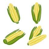 Ensemble de maïs Vecteur Photo stock