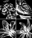 Ensemble de milieux avec les fleurs décoratives. illustration de vecteur
