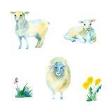 Ensemble de moutons de bande dessinée Photographie stock libre de droits
