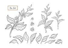 Ensemble de nature de vecteur Ligne conception d'art d'arbre de thé, buisson illustration de vecteur