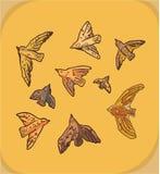 Ensemble de neuf oiseaux Images stock