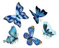Ensemble de papillons bleus Image libre de droits