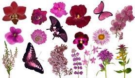 Ensemble de papillons et de fleurs de couleur rouge Photographie stock libre de droits