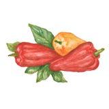 Ensemble de paprikas colorés photo stock