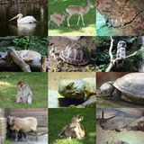 Ensemble de 12 photos d'animaux Images stock