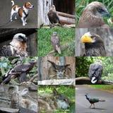 Ensemble de 12 photos d'animaux Photographie stock