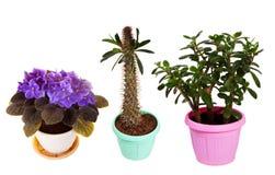 Ensemble de plante d'intérieur dans des pots. D'isolement sur le blanc Photos libres de droits