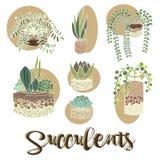 Ensemble de plantes d'intérieur de cactus dans des pots de fleur Graphismes de vecteur illustration stock