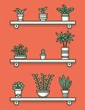 Ensemble de plantes d'intérieur dans des pots sur des étagères Photo stock
