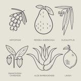 Ensemble de plantes médicinales illustration stock