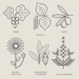 Ensemble de plantes médicinales illustration libre de droits