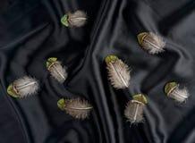Ensemble de plume de la Turquie de faisan sur le fond en soie noir photographie stock