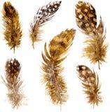 Ensemble de plumes brunes chinées Image stock