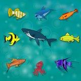 Ensemble de poissons de mer et d'océan cartoon Photos stock