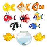 Ensemble de poissons et de cuvette tropicaux colorés d'aquarium Image libre de droits