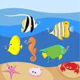 Ensemble de poissons tropicaux Photos stock
