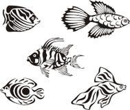 Ensemble de poissons tropicaux noirs et blancs illustration libre de droits