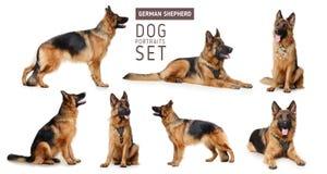 Ensemble de portraits de berger allemand pelucheux Dog Le symbole de 2018 ans par l'horoscope traditionnel chinois Photographie stock libre de droits