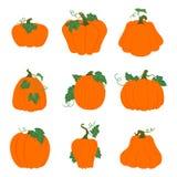 Ensemble de potirons oranges simples avec des feuilles et des vignes d'isolement en fonction Illustration Libre de Droits