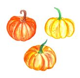 Ensemble de potirons tirés par la main de légumes d'aquarelle illustration libre de droits