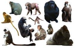 Ensemble de primats photos stock