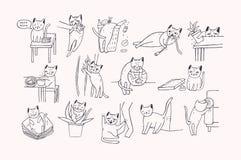 Ensemble de problème avec le comportement de chat Le chaton miaulant, mord, des éraflures, le sofa de marques, sommeils sur des v Image stock