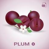 Ensemble de prunes mûres fraîches avec des feuilles et des fleurs Photo libre de droits
