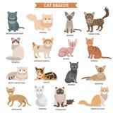 Ensemble de race de chat illustration stock