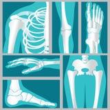 Ensemble de rayon X d'humain illustration de vecteur