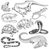 Ensemble de reptiles et d'amphibies Crocodile, alligator et serpents, lézard de moniteur, caméléon et tortue sauvages Animal fami illustration de vecteur
