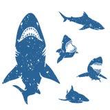 Ensemble de requins illustration libre de droits