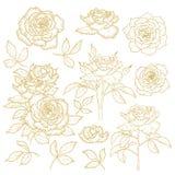 Ensemble de roses tracées les grandes lignes un-colorées Images libres de droits