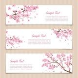Ensemble de Sakura Banners horizontale avec l'endroit pour le texte Photos libres de droits