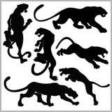 Ensemble de silhouettes de chats sauvages Photo libre de droits