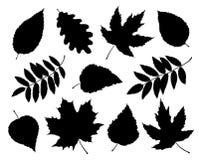Ensemble de silhouettes d'isolement de feuilles et de branches Photographie stock