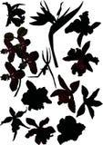 Ensemble de silhouettes d'orchidée Photographie stock