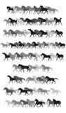 Ensemble de silhouettes de chevaux de vecteur dans noir et gris Photo libre de droits