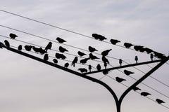 Ensemble de silhouettes des oiseaux sur des fils, saison grise d'automne de ciel Images libres de droits