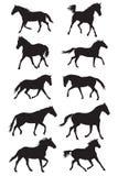 Ensemble de silhouettes noires de chevaux de trot de vecteur Photos libres de droits