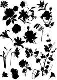 Ensemble de silhouettes noires de fleur Image stock