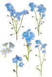Ensemble de six branches bleu-clair de myosotis Image libre de droits