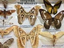 Ensemble de spécimen de papillon photo stock