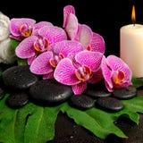 Ensemble de station thermale de brindille de floraison d'orchidée violette dépouillée, phalaenopsis Images libres de droits