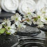 Ensemble de station thermale de prune fraîche de floraison de brindille sur des pierres de zen Photographie stock libre de droits