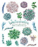 Ensemble de succulents d'aquarelle Photos libres de droits