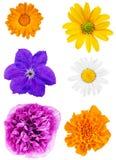 Ensemble de têtes de fleur d'isolement sur le fond blanc Images stock