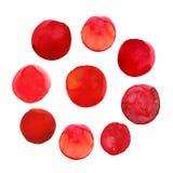Ensemble de taches tirées par la main rouges colorées d'aquarelle, cercles d'isolement sur le blanc Images stock