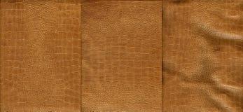 Ensemble de texture brun clair de cuir de crocodile Photographie stock libre de droits