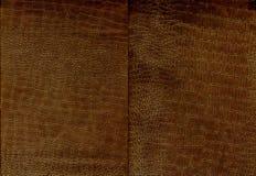Ensemble de texture brune de cuir de crocodile Photographie stock
